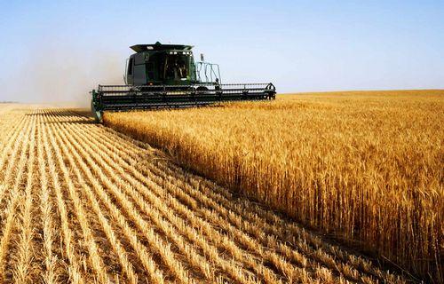 Без газа схпк «овощной» под череповцом может остаться без всей линии урожая
