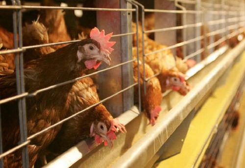 Имущество оао «птицефабрика климовская» выставлено напродажу