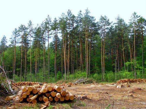 Клюква нагрядке имобильная баня— все это «российский лес»