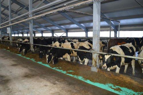 Рост производства мяса ожидается ввологодской области