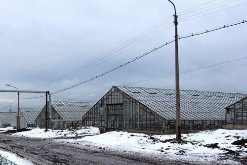 Собственников череповецких огурцов отстранили отуправления схпк «овощной»