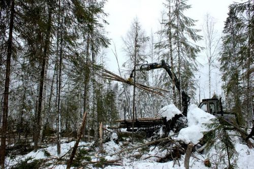 Выставка-ярмарка «российский лес» пройдет ввологде 4-6 декабря