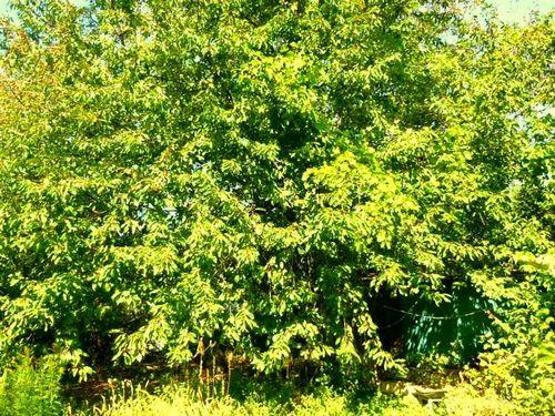 Залесье - поселок для комфортной жизни и отдыха