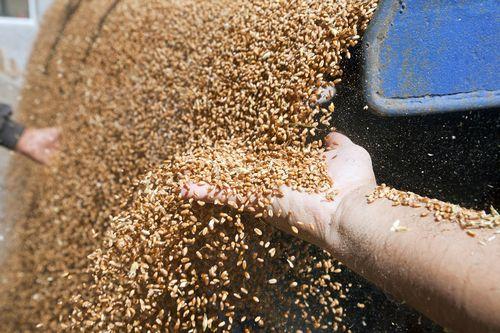 Засуха «подгоняет» инфляцию